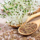 Seeds, Alfalfa for sprouting - 50g
